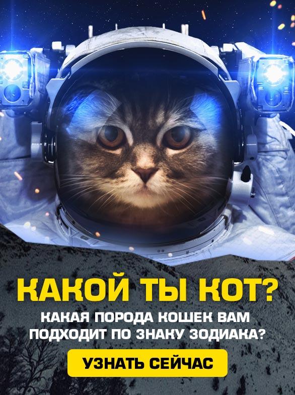 Какой ты кот по гороскопу?